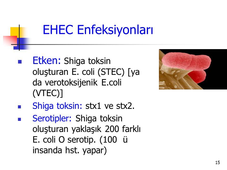 EHEC Enfeksiyonları Etken: Shiga toksin oluşturan E. coli (STEC) [ya da verotoksijenik E.coli (VTEC)]